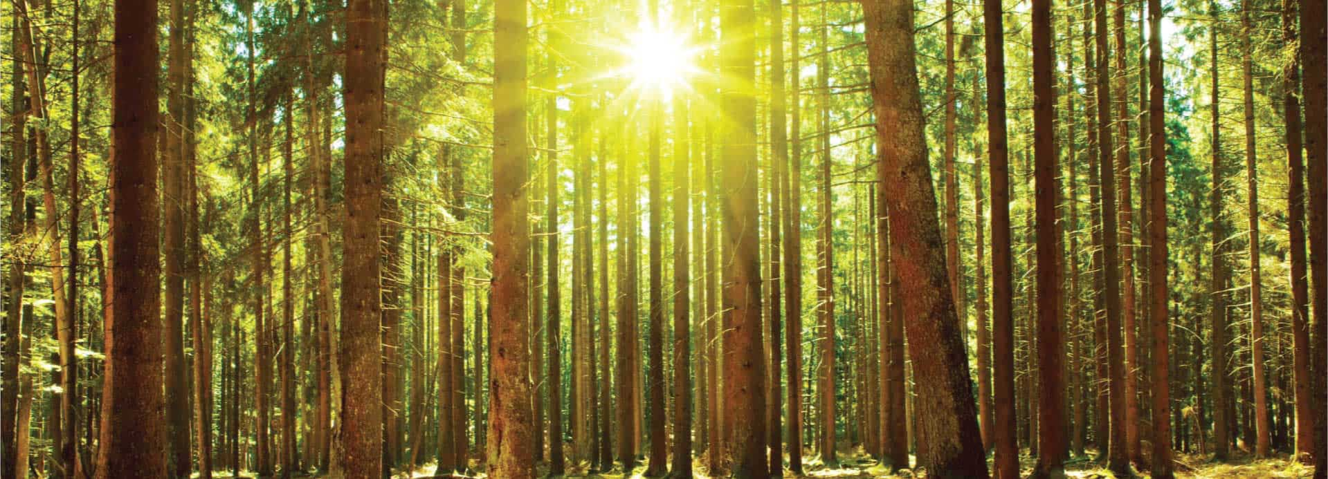 sun-forest-opt_02